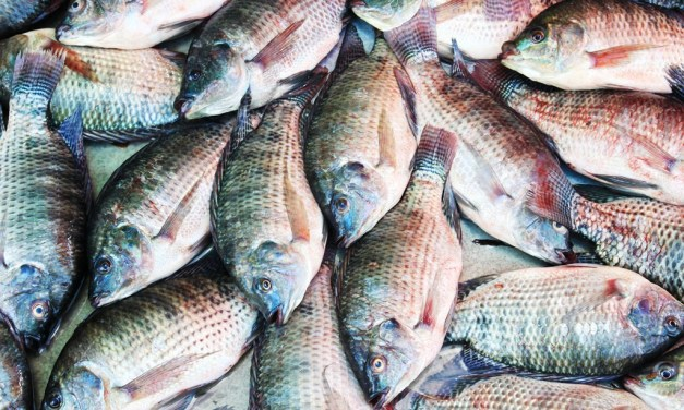 Starting Tilapia Fish Farming Business Plan (PDF)