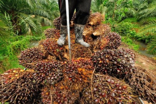 How To Make Money From The Palm Oil Business