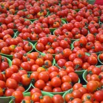 How To Start A Lucrative Tomato Farming Business In Nigeria (Comprehensive Guide + eBook)