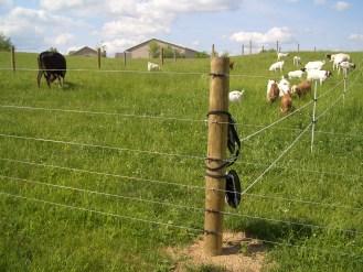 Pasture Fence - Goat Farming In Nigeria