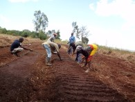 Onion Farming Land Preparation