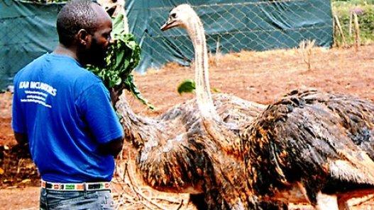 Success Story Of Geoffrey Kago