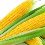 How To Start A Lucrative Maize Farming Business In Nigeria Or Africa (The Complete Guide)