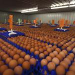 How To Start A Lucrative Egg Supply Business In Nigeria: The Complete Guide