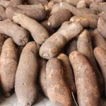 How To Start Yam Farming In Nigeria: The Complete Guide
