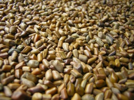 How To Start Exporting Cassia Tora Seed From Nigeria To International Buyers