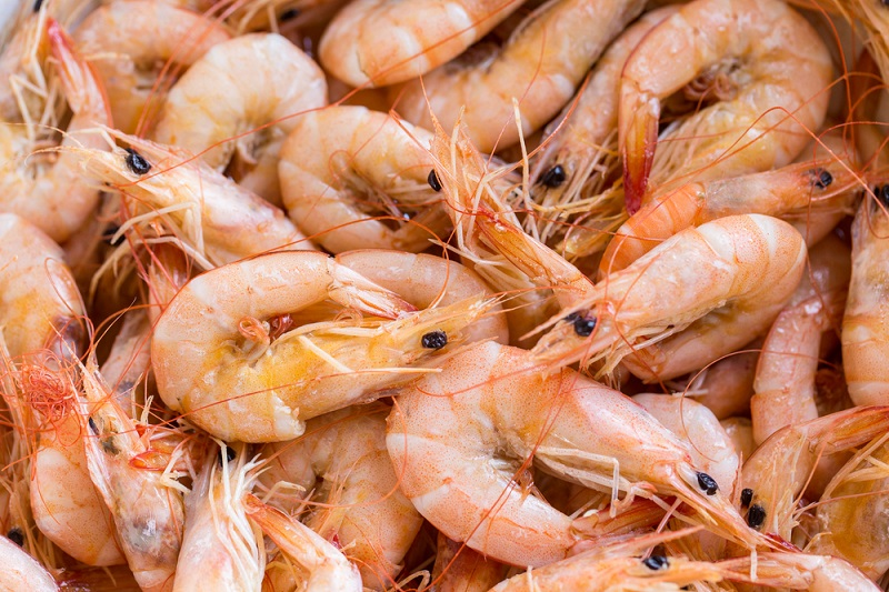 How to Start Shrimp Farming Business in Nigeria