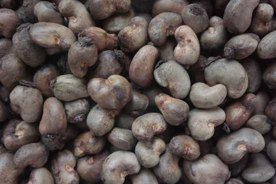 Cashew Nuts Exporters In Nigeria | Cashew Nuts Suppliers In Nigeria | How To Export Cashew Nuts In Nigeria