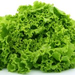 How To Start A Lucrative Lettuce Farming Business In Nigeria: The Complete Guide