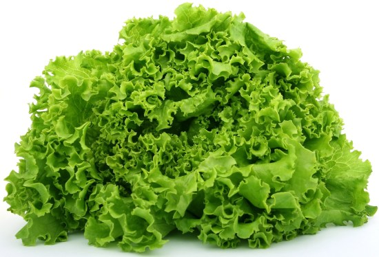 How To Start Lettuce Farming In Nigeria Or Africa: Complete Guide