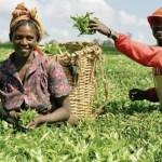 How To Start A Lucrative Agricultural Business in Nigeria: The Complete Guide