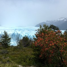Perito-Moreno-Glacier-Landscape-1365