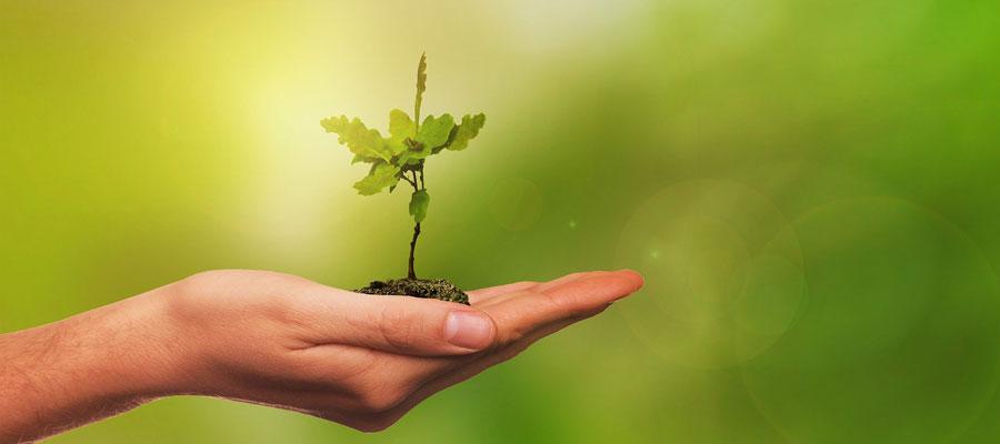StartUp Business Wachstum (Bild: Pixabay)