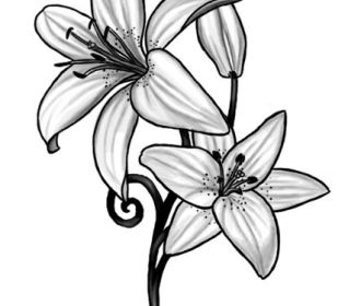 Lily Tattoo by ~Black-petal on deviantART