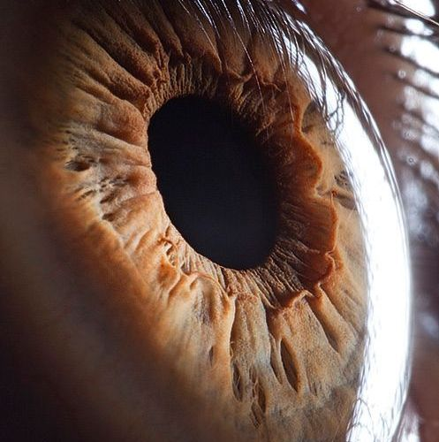 Eyes in general fascinate me. This to me is the most amazing tool in the human b…