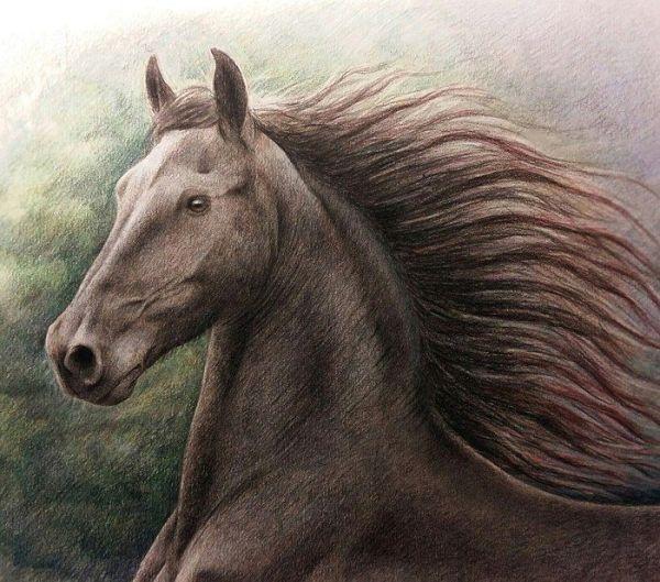 Рисунки с лошадьми: Картинки лошадей для срисовки (32 фото ...