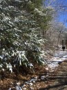 Late Spring Snow Pathway to the Retreat