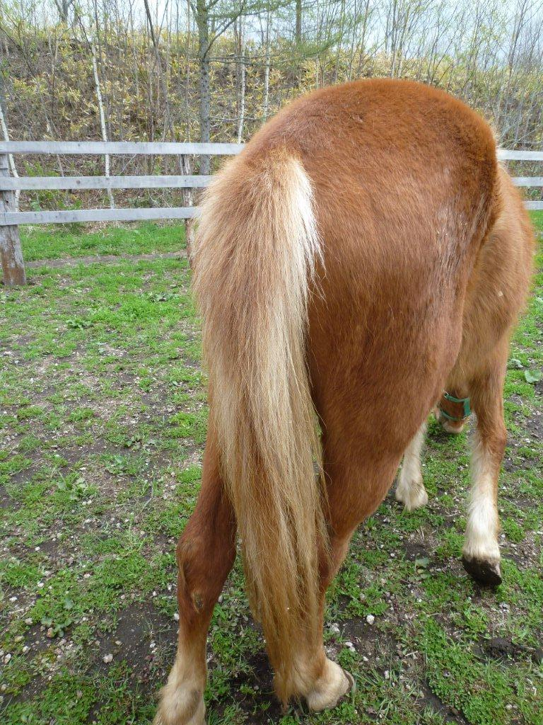 馬の尾のひみつ…|遊駿のブログ