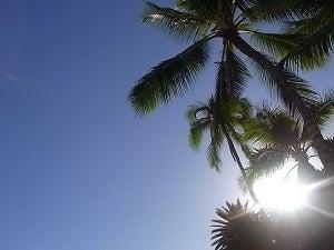 リボンレイ×ハワイアン雑貨×お手軽グルメ=満喫ハワイ!