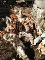 .★緊急★【拡散希望】5年に一度の「動物の愛護及び管理に関する法律」の改正を求める署名のお願い