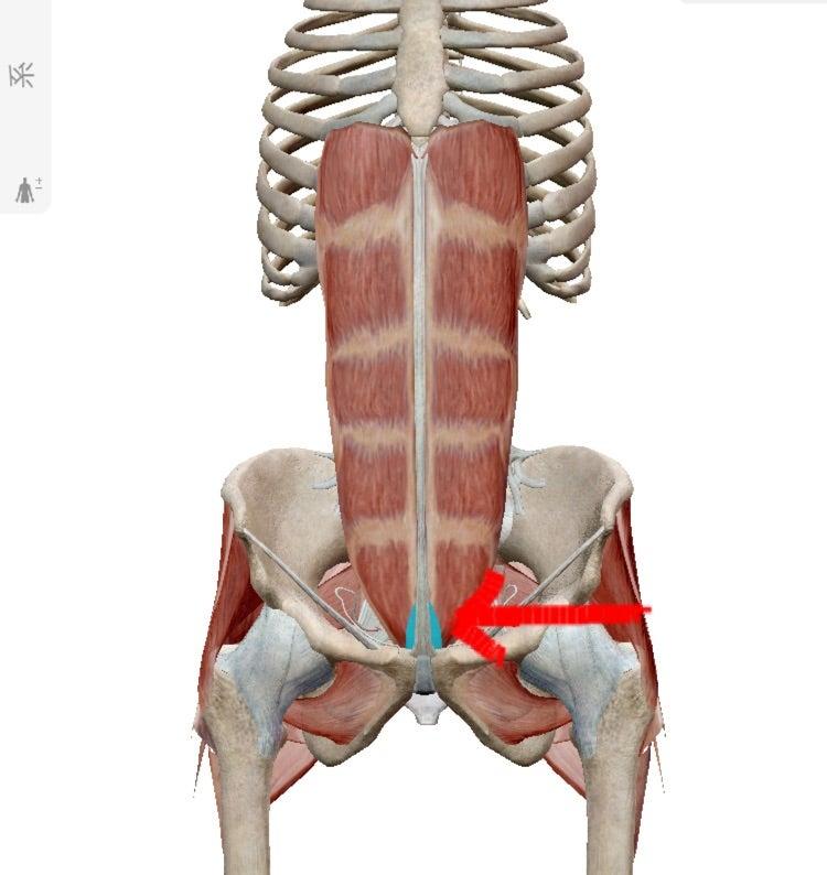 産後の下腹引き締め&綺麗な縦線作りに錐體筋トレーニング ...