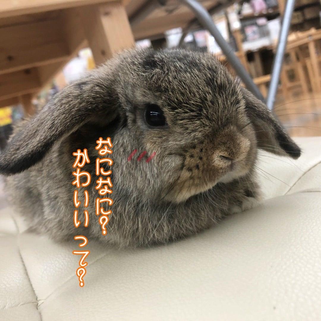 可愛い小動物達のお寫真をご紹介 | ラビータ東古松店 小動物 ...