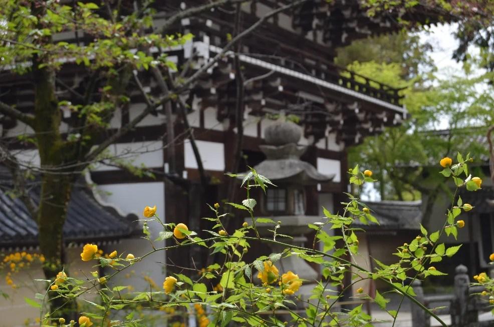 人名漢字遊び,『夢』を含む!! | シンゾウのブログ