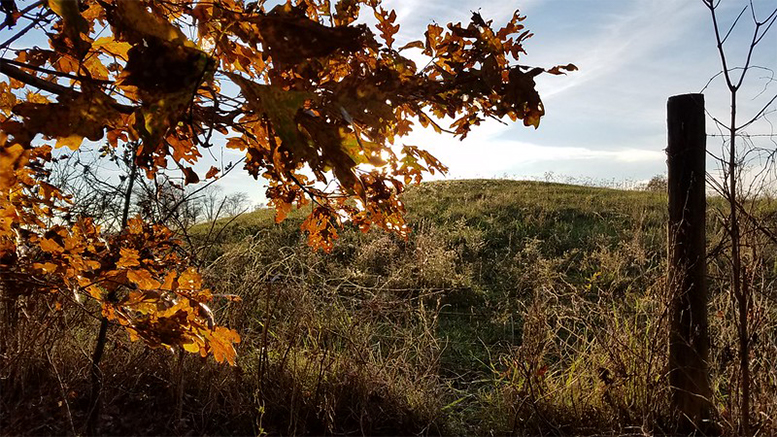 Rockbridge State Nature Preserve, Rockbridge, Ohio (Dan Keck Photo/Flickr.com via Creative Commons 2.0)