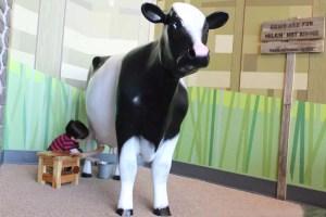 boy milking a cow