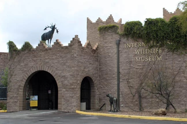 the International Wildlife Museum is worth checking out on your short trip to Tucson