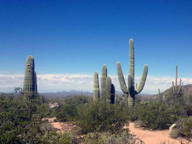 Saguaro National Park is great