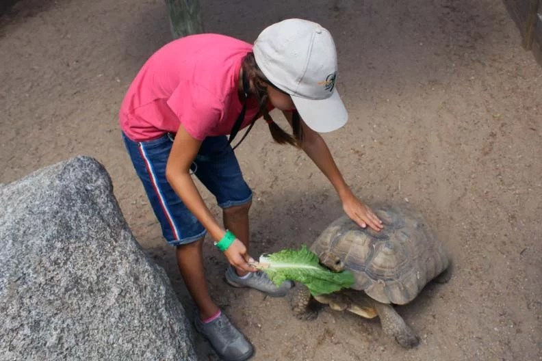 Journey feeding a tortoise