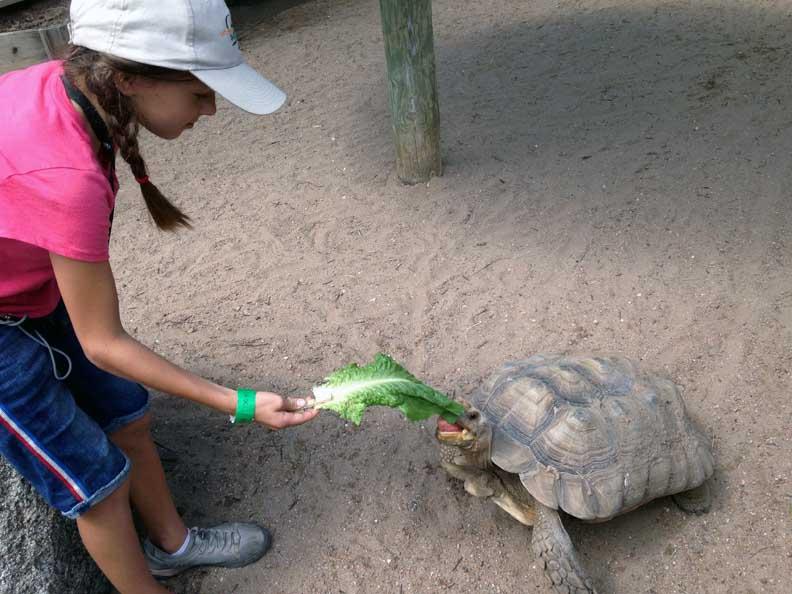 a girl feeding a tortoise