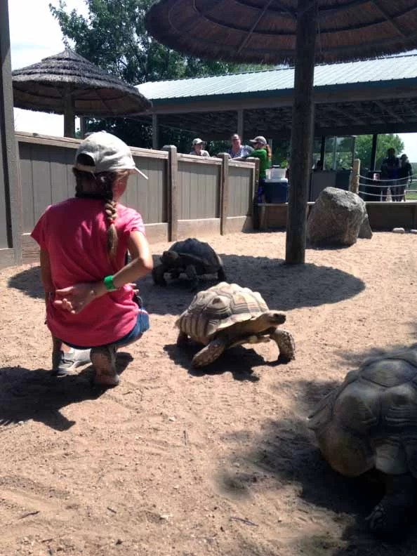 in-with-the-tortoises-
