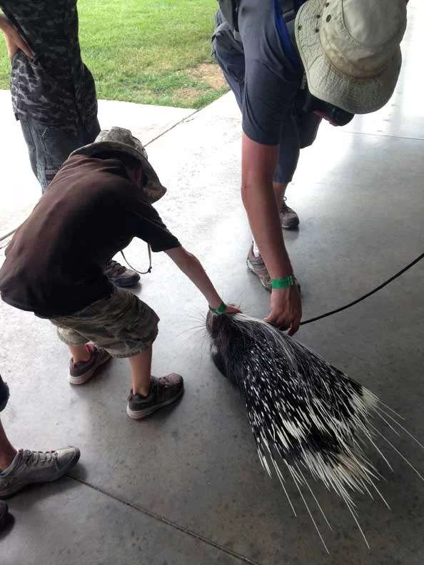 a boy petting a porcupine