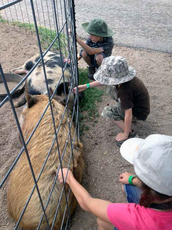 kids petting pigs