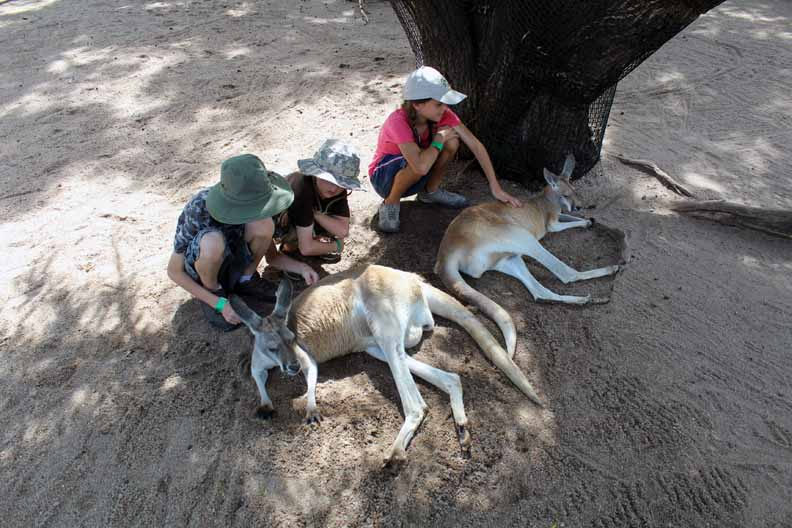 three kids petting kangaroos