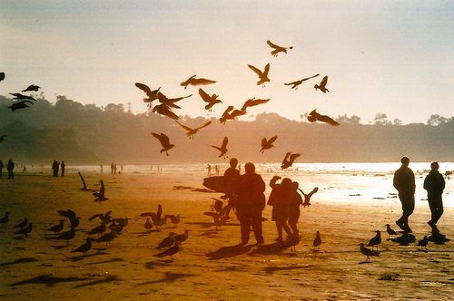 Bird watching in Andman