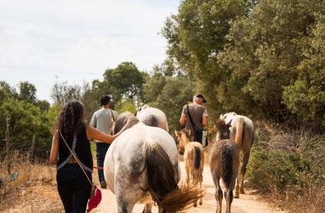 Book your HorseWalk here