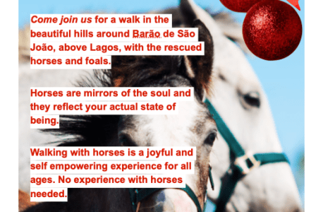 Join us for a Christmas Walk