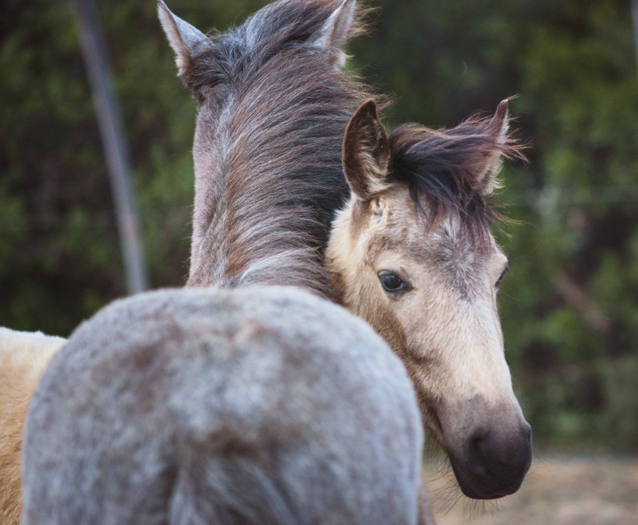 rescue horses algarve lagos portugal