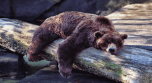 When a stock stops moving, it can go in Hibernation for long long period of time