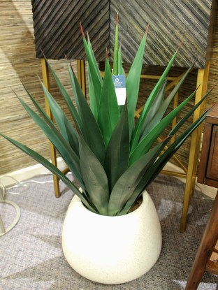 Striking green plant with leaves that come to a point and shoot straight up are in a white vase giving a striking look to the area of the room it is positioned