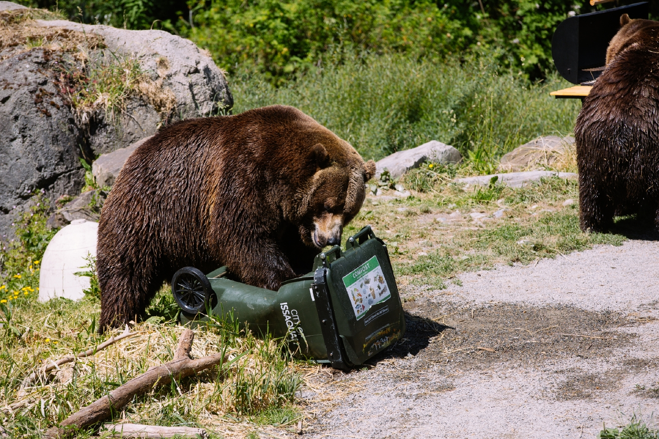 Photos Bears Tear Apart A Birthday Party For WPZs Bear
