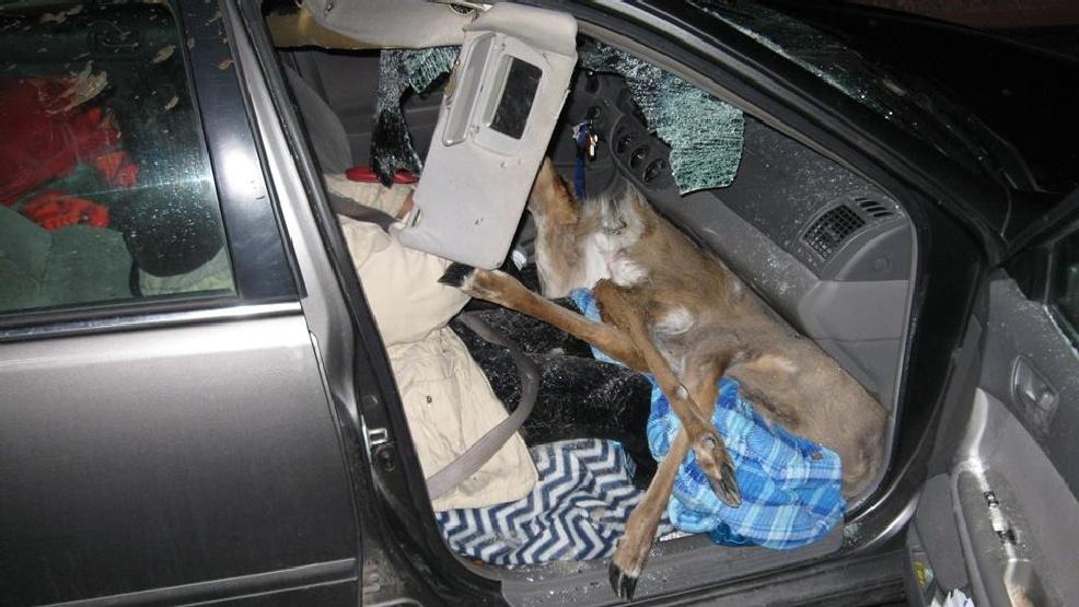 LaGrange Co Cops Deer Hit By Car Lands On Passengers