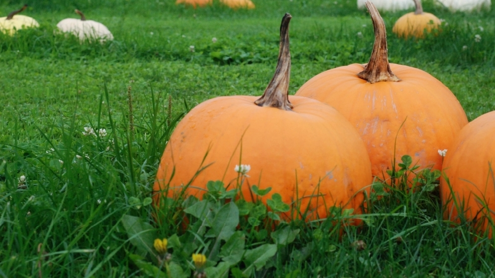 Image result for 5 stocker farms pumpkin patch