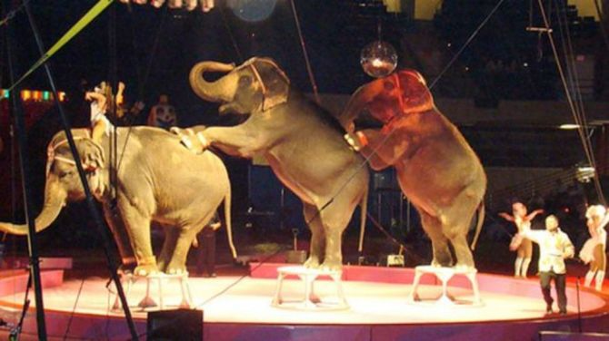 Ansar Shrine Circus coming to Springfield