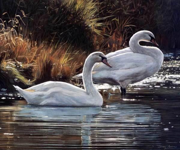 Картина раскраска по номерам 50x65 Лебеди у берега– купить ...