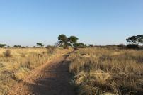 Trans Kalahari Walk