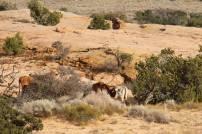 Rinder mit langen Hörnern